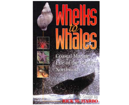 whelks-to-whales